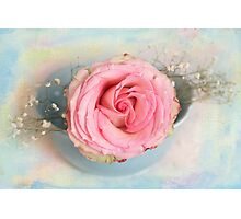 Single Pink Rose in a pastel blue bowl Photographic Print