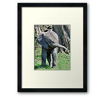YES I'M DOING THE BABY ELEPHANT WALK - THE AFRICAN ELEPHANT – Loxodonta Africana Framed Print