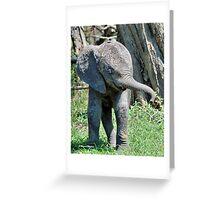 YES I'M DOING THE BABY ELEPHANT WALK - THE AFRICAN ELEPHANT – Loxodonta Africana Greeting Card