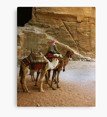 Camel Driver Canvas Print