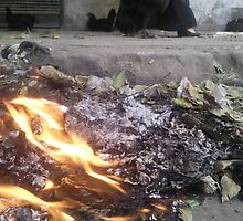 Aleppo Burning by entheogenie