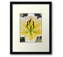YELLOW LILY MACRO Framed Print