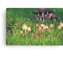 Bunch of Small Mushrooms Canvas Print