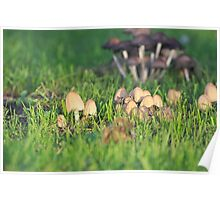 Bunch of Small Mushrooms Poster