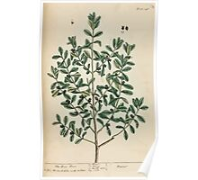 A curious herbal Elisabeth Blackwell John Norse Samuel Harding 1737 0500 The Bax Tree Poster