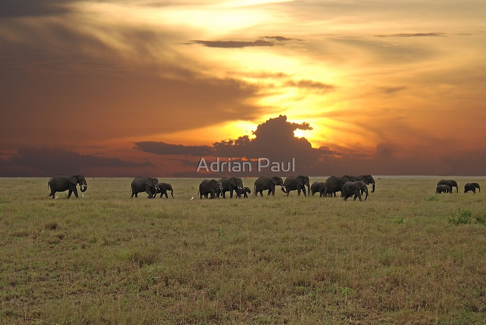 Going Home - A Serengeti Sunset, Tanzania by Adrian Paul