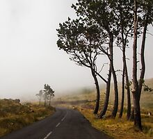Road to Clouds - Nature Photography by JuliaRokicka