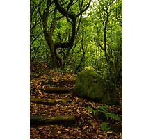 Wild Forest - Nature Photography Photographic Print