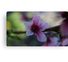 Blossom - Macro Canvas Print