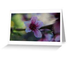 Blossom - Macro Greeting Card