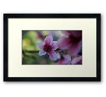 Blossom - Macro Mk II Framed Print