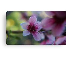Blossom - Macro Mk II Canvas Print