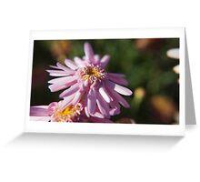 Pink daizy - Macro Greeting Card