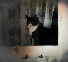 Cat in the Window by VictoriaHerrera