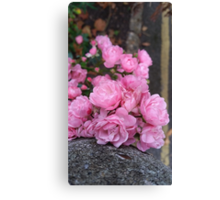 Last Of The Summer Pink Canvas Print
