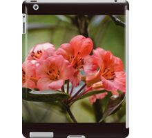 Rhododendron in full bloom iPad Case/Skin