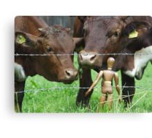 Amazed Cows Canvas Print