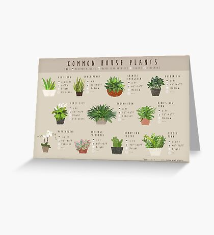 Common House Plants Infographic Greeting Card