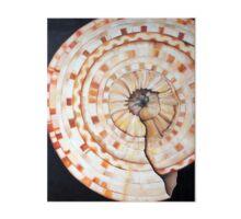 Sundial Shell Gallery Board