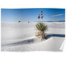 Soaptree yucca, White Sands New Mexico Poster