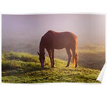 Horse on the Foggy Field Poster