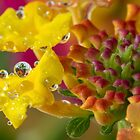Lantana Bubbles by Lynn Gedeon