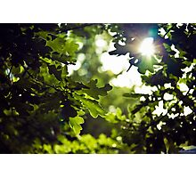 Forest oak Photographic Print