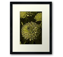Green Chrysanthanum Woodcut Framed Print