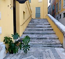 The Swiss Cheese Plant Of Menton by Fara