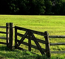 Green Pastures by AngieDavies