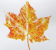 Maple Leaf Print 3 by Jennifer J Watson