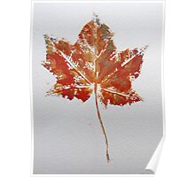 Maple Leaf Print 1 Poster