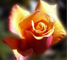 ONE YELLOW ROSE by OlaG