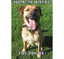 Home is where the dog is Photographic Print