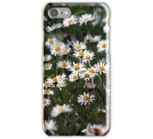 Daisies as iPhone Case iPhone Case/Skin