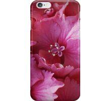 Hydrangea as iPhone Case iPhone Case/Skin