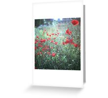 Red wild poppy flowers on green Hasselblad square medium format film analogue photograph Greeting Card