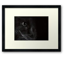 Cat in the Light Framed Print