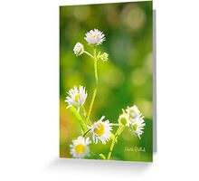 Celebrating the Joy of Summer Greeting Card