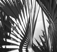 Palm Shapes  by globeboater