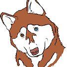 Red Husky by rmcbuckeye