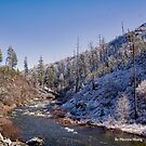 American River in Winter by Maurine Huang