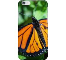 Monarch Danaus Plexippus iPhone Case/Skin