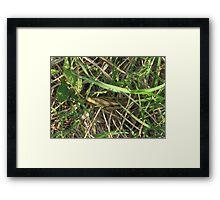 Grasshopper In Cammo Framed Print