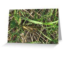Grasshopper In Cammo Greeting Card