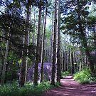Devil's Head Fire Lookout Trail by Bernie Garland