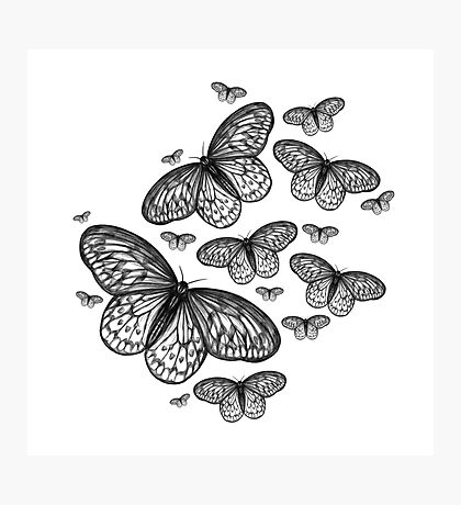 Butterflies in B&W Photographic Print