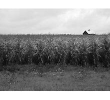 Cornfield and Farmhouse Photographic Print