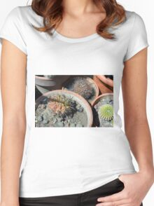 Cacti in flower pots Women's Fitted Scoop T-Shirt
