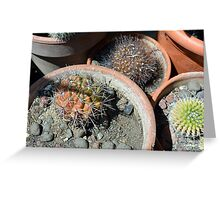 Cacti in flower pots Greeting Card